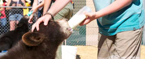 Bottle Feeding, Yellowstone Bear World, Rexburg, Idaho